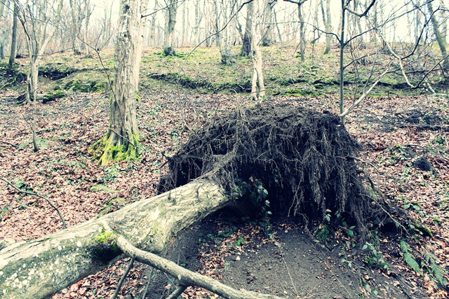 srušeno stablo