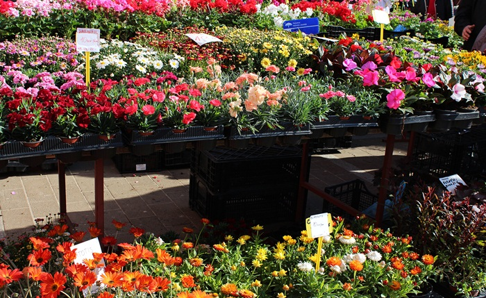 6 Cvijeće na Dolcu