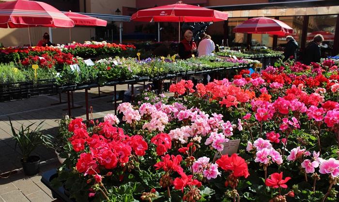 7 Flowers on market Dolaz in Zagreb