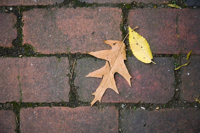 Leaves on a brick pathway