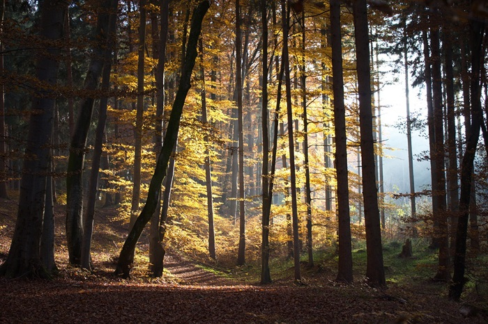 14 jesen šetnja šuma