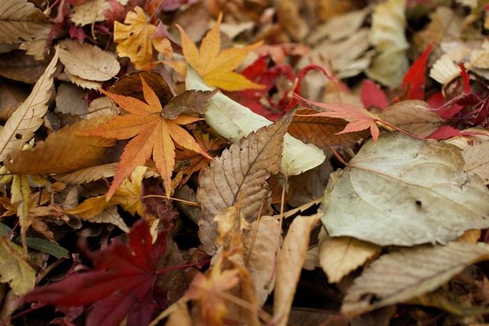 2 lišće