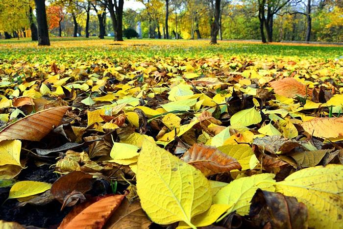 20 lišće jesen